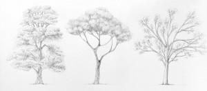 3 arbres différents